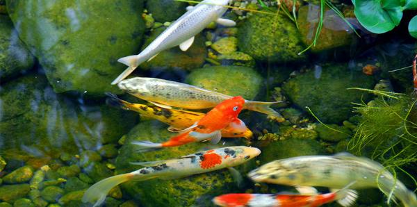 Having fishes