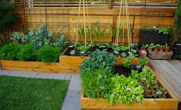 elevated vegetable beds