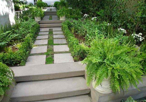 green plants ferns