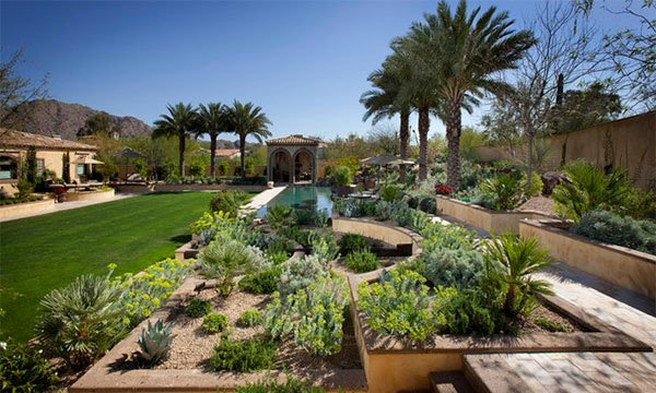 yellow plants - Desert Landscape Design Ideas