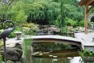 pond landcaspe