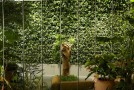 green walll