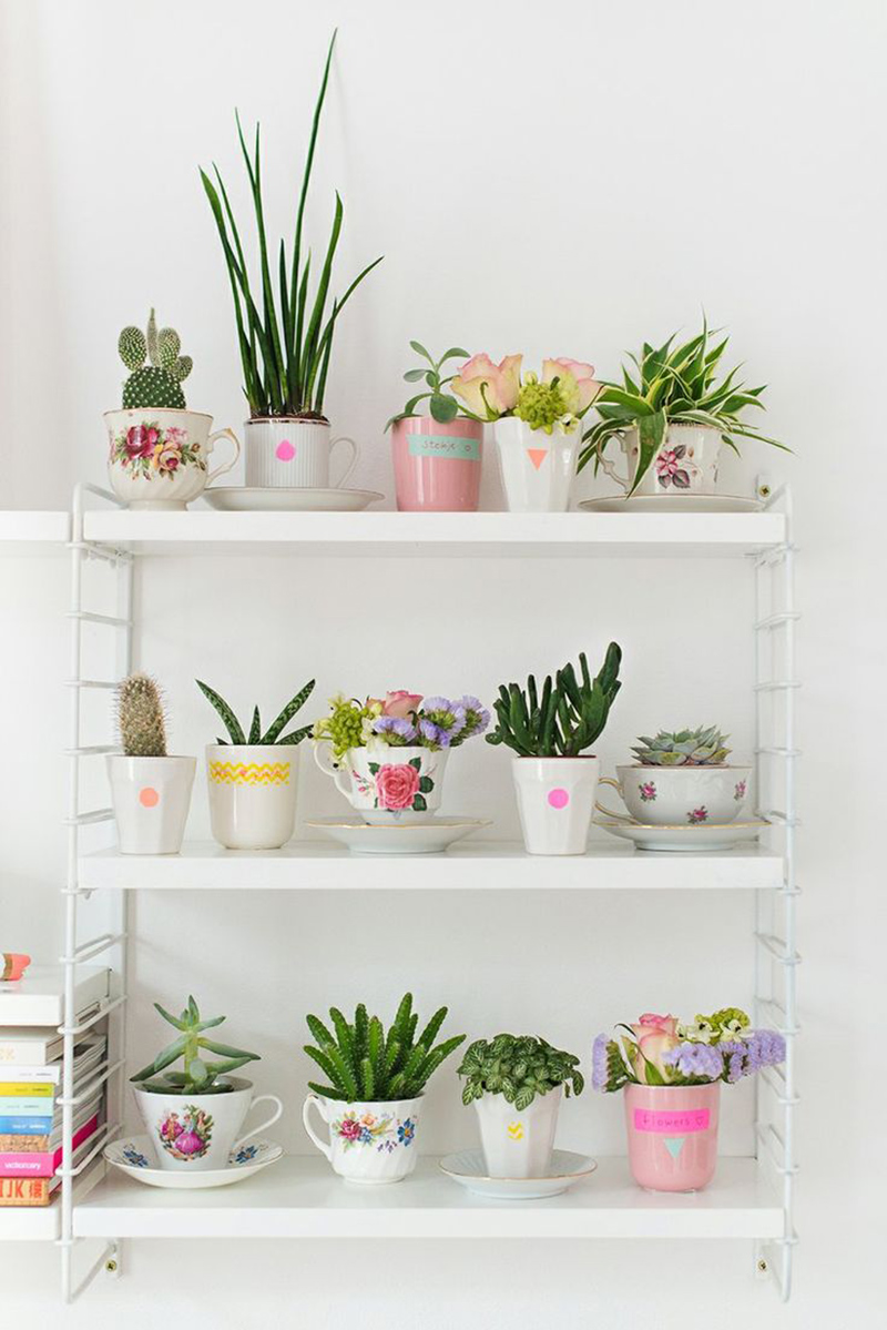 Succulent Plants in Tea Cups