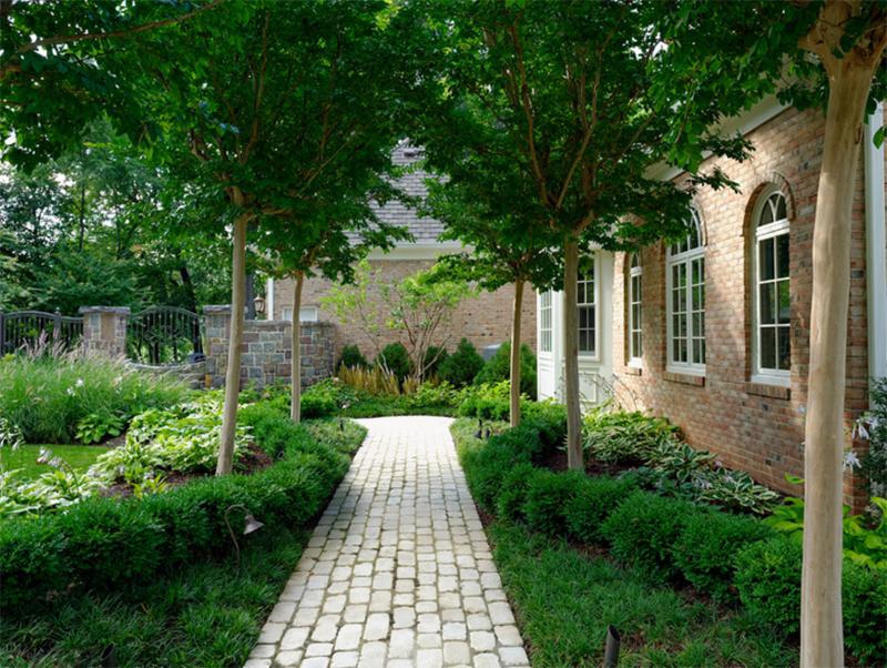 plant hedge design