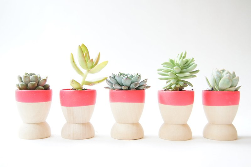 Dip DIY Adorable Dipped Mini Wooden Bowls & Planter